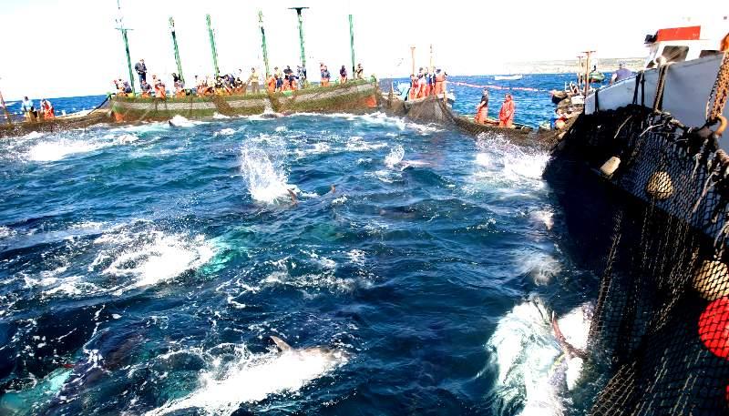 Để Việt Nam trở thành quốc gia mạnh về biển, làm giàu từ biển (Phần 2)